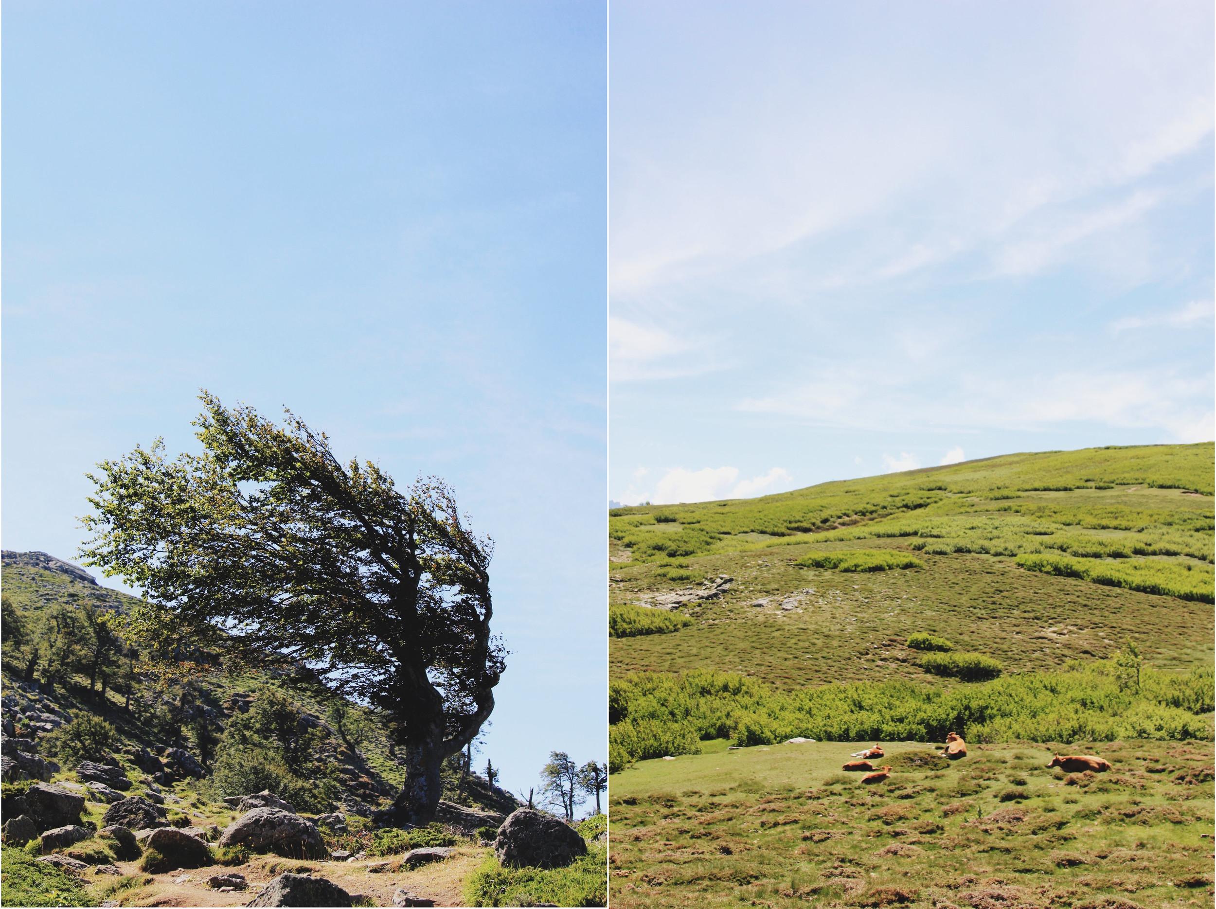 arbre-lac-du-ninu.jpg