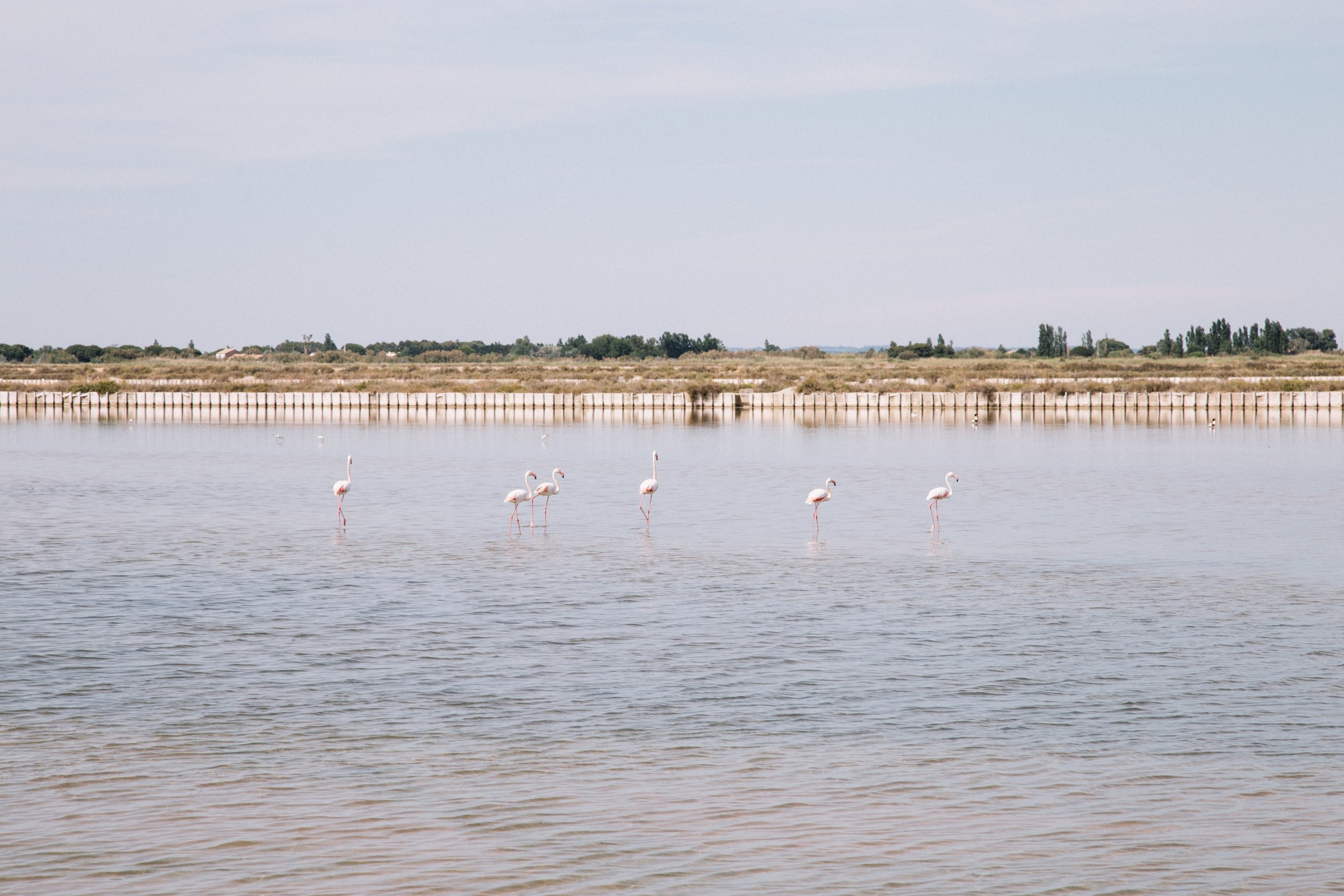Aigues-mortes-salin-flamants-roses-.jpg