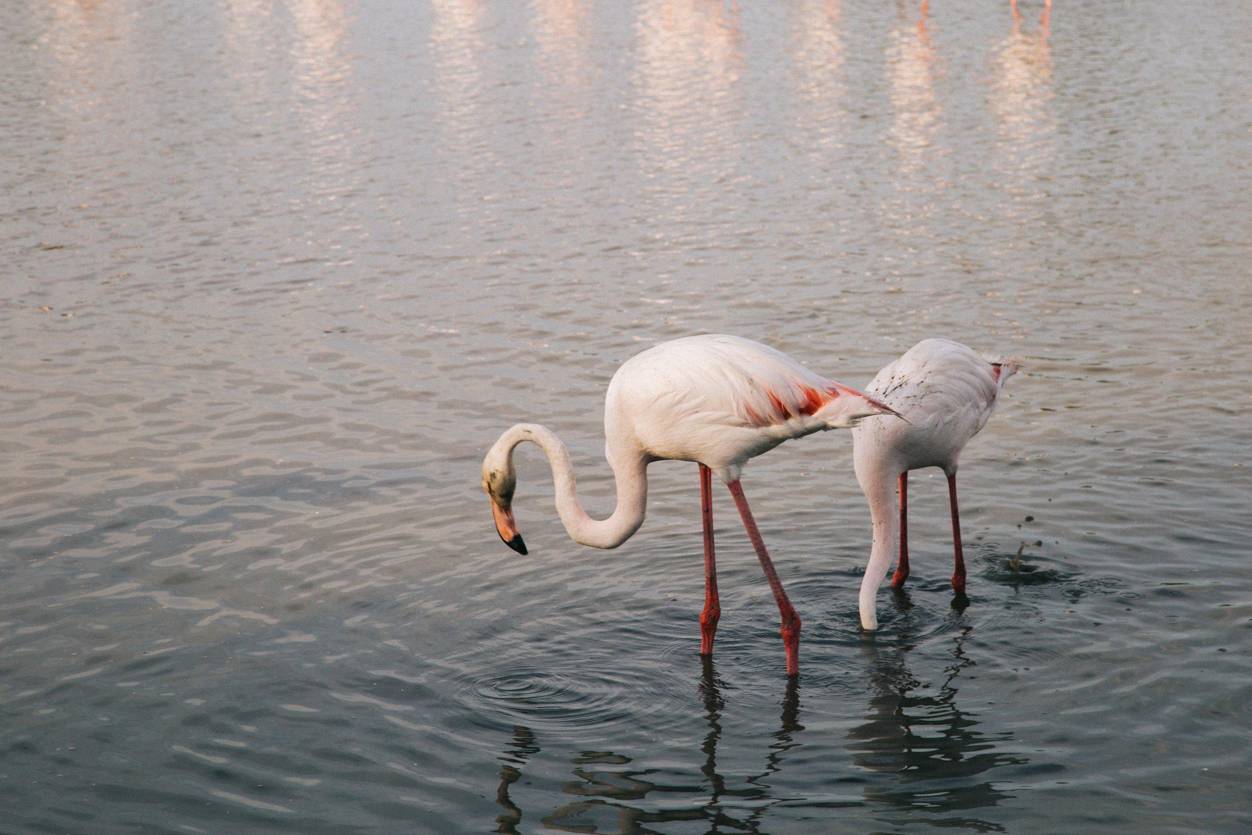 Pont-de-gau-parc-ornithologique-voyage-.jpg