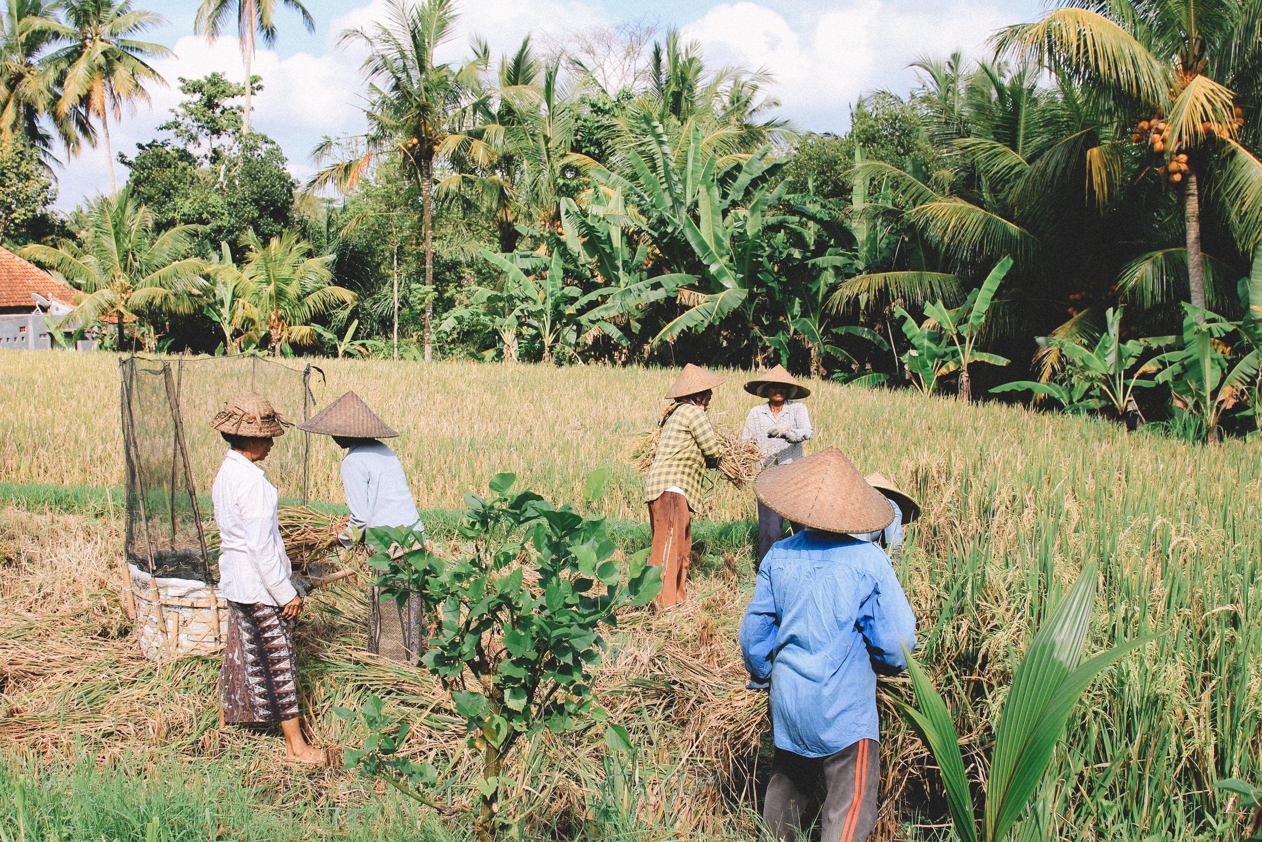 Bali-on-the-road-indonésie.jpg