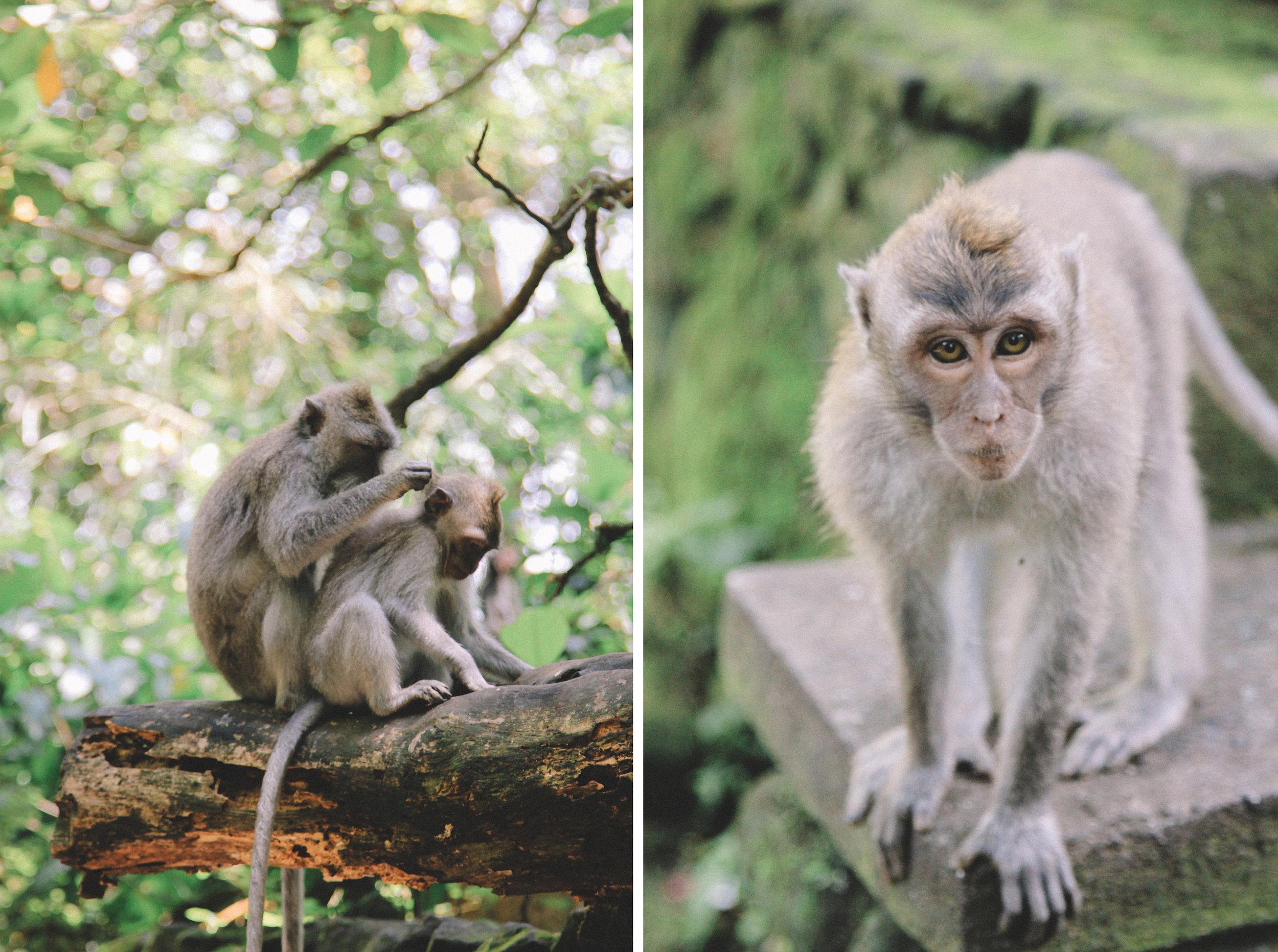 monkey-forest-ubud-bali-indonésie-foret-singes.jpg