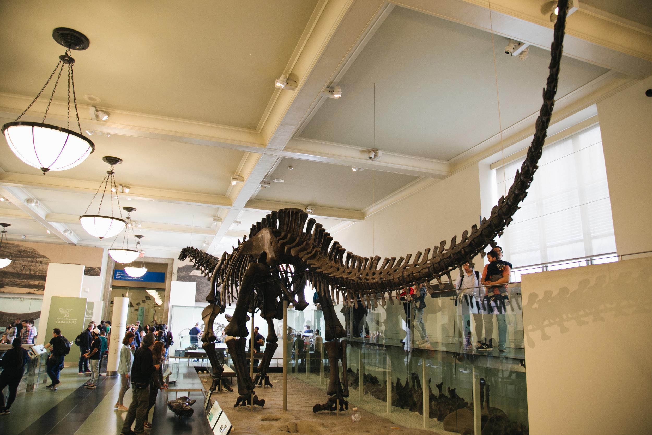 american natural history museum - newyork-city 9.jpg