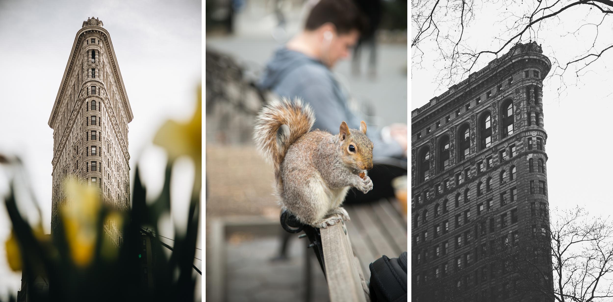 flatiron-madison-square-park-ecureuil-newyork.png
