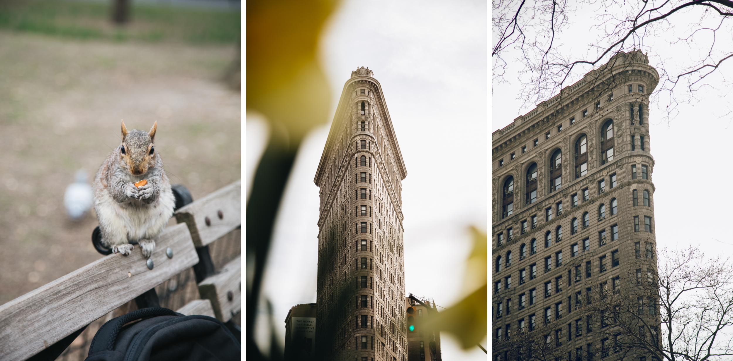 flatiron-madison-square-park-ecureuil-newyork-blog.png
