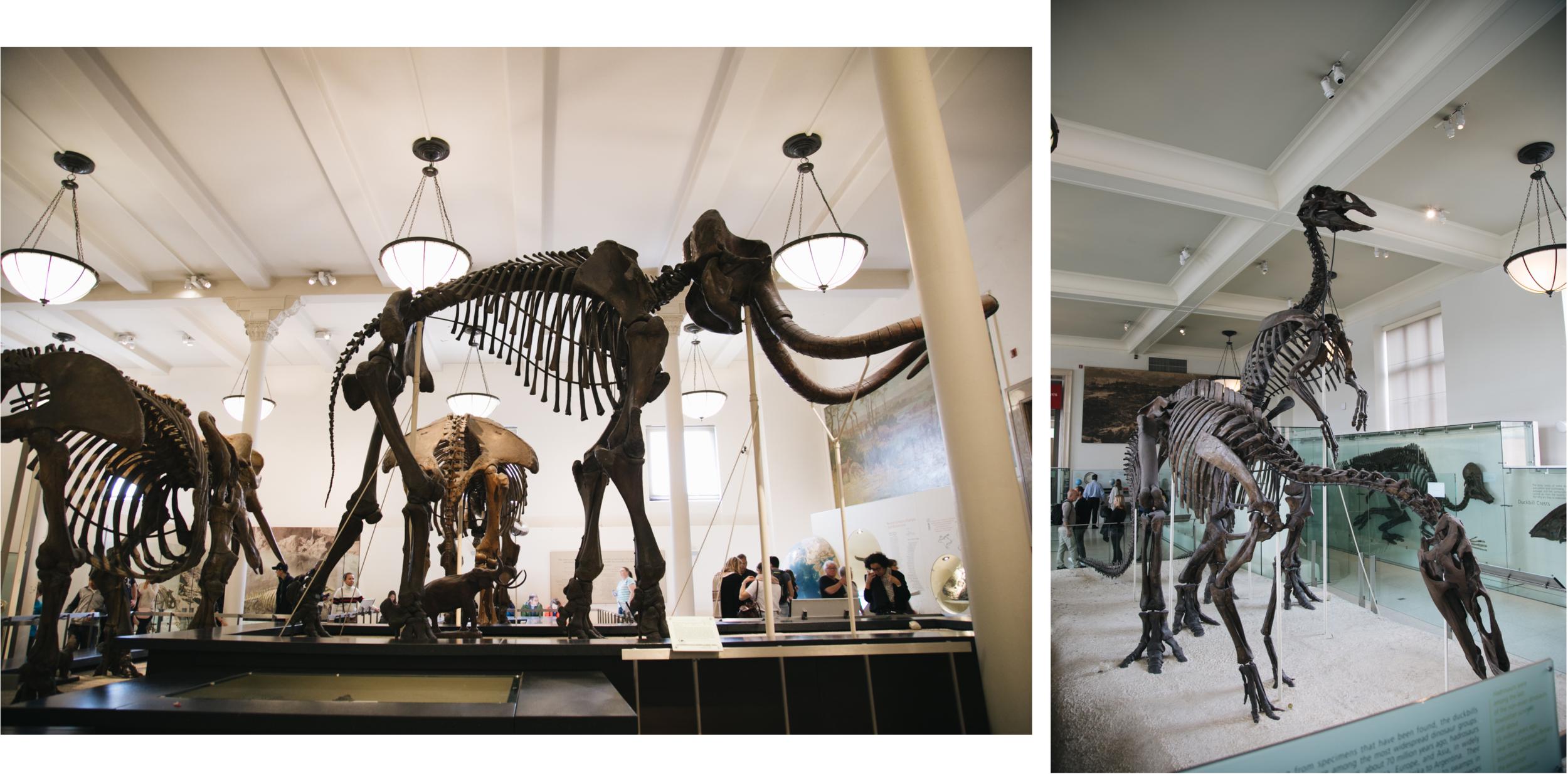 american-natural-history-museum-newyork-dinosaures.png