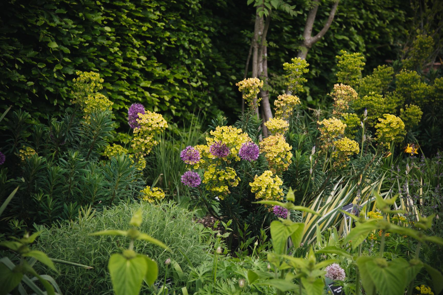 Jardin-botanique-universite-de-cambridge-blog.jpg