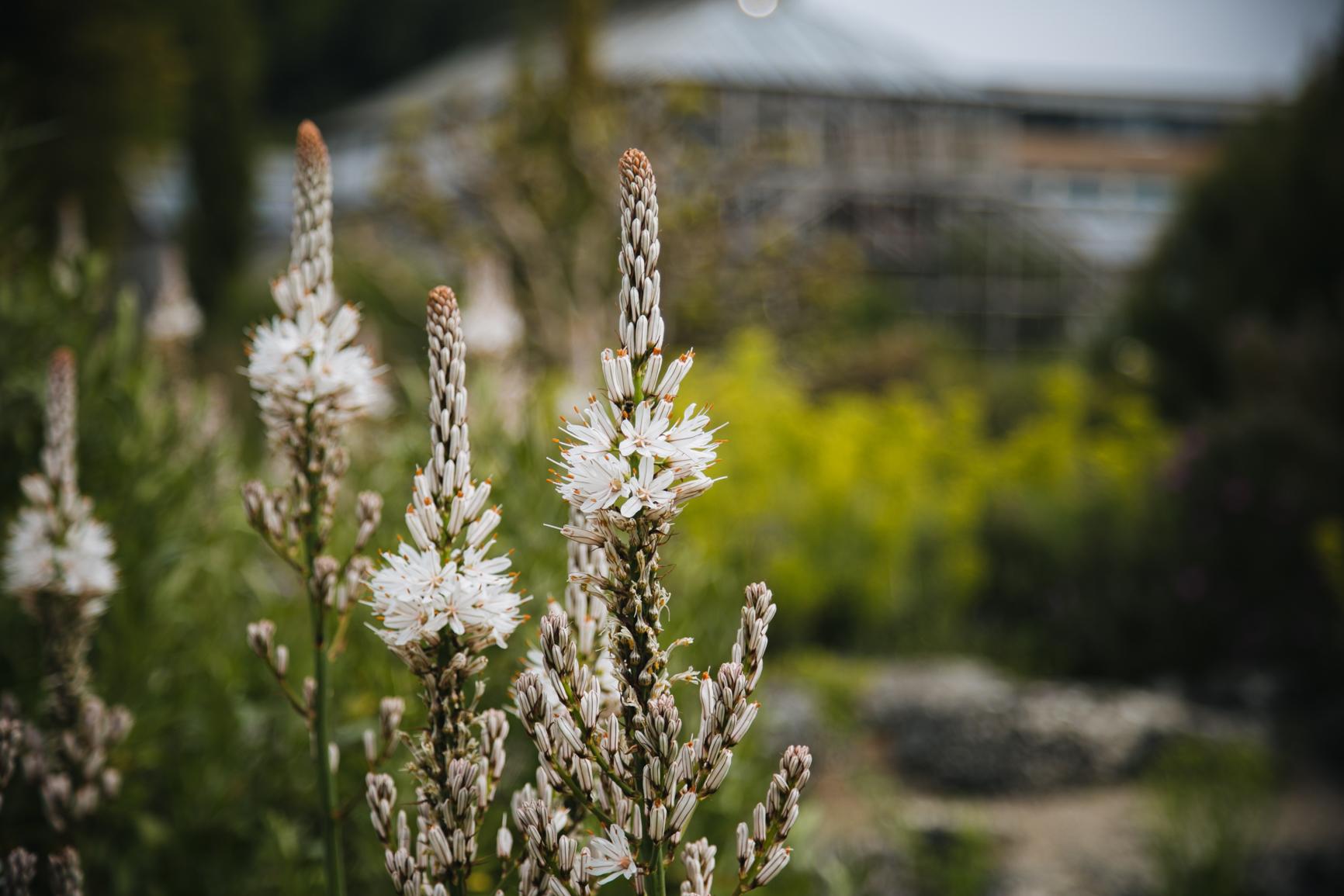 Jardin-botanique-universite-de-cambridge-voyage.jpg