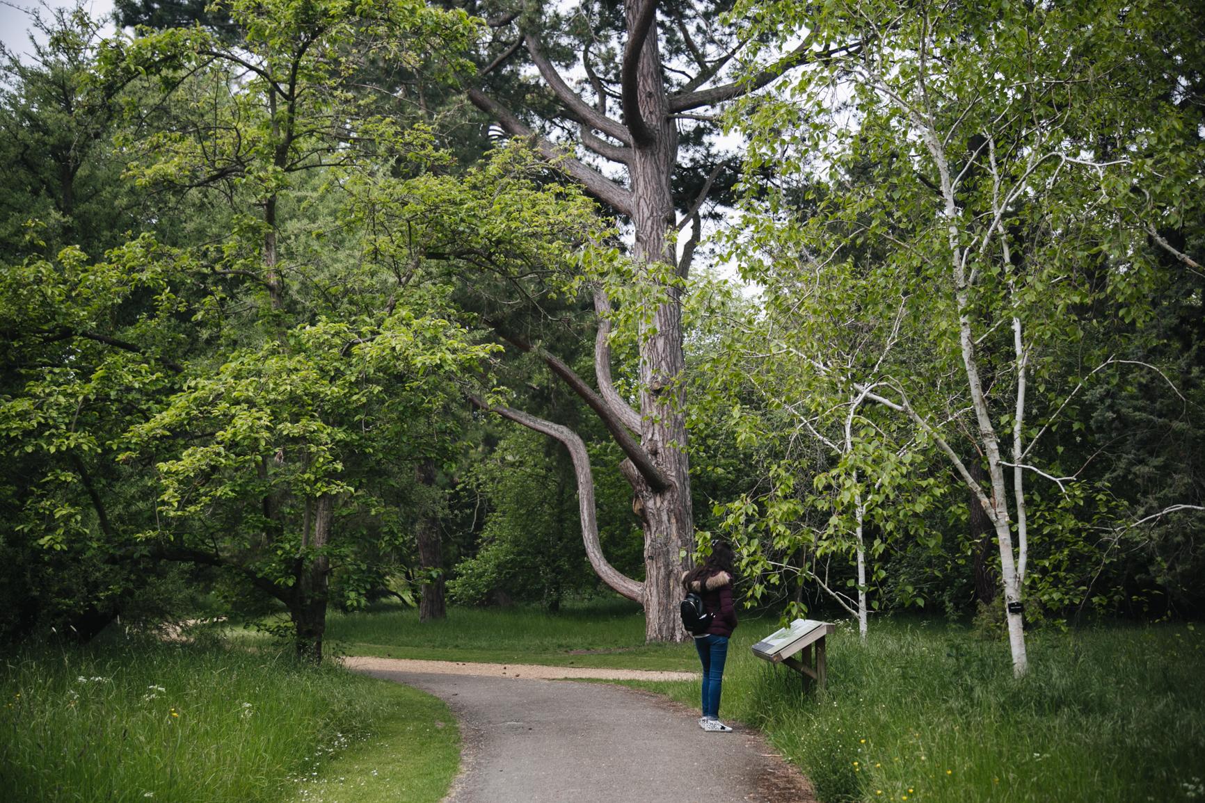Jardin-botanique-universite-de-cambridge.jpg