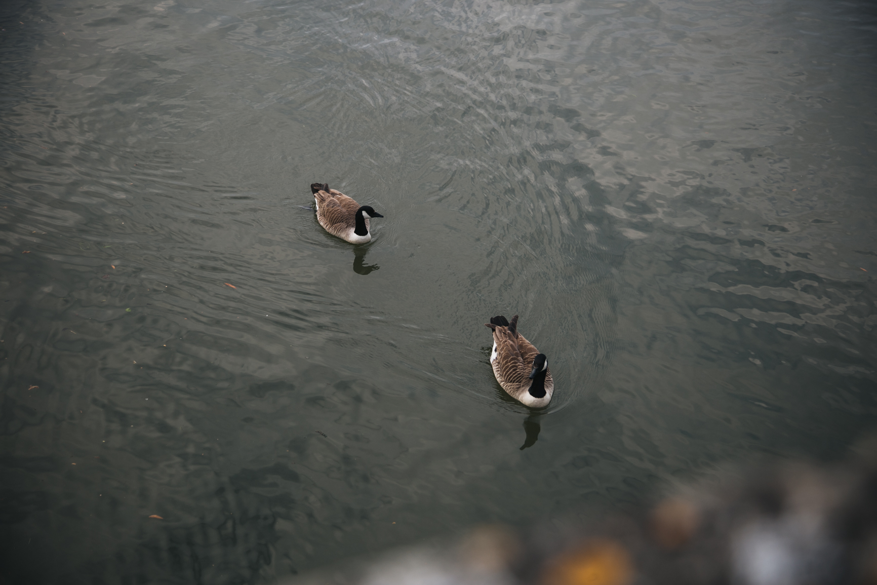 Punting-in-Cambridge-canards.jpg