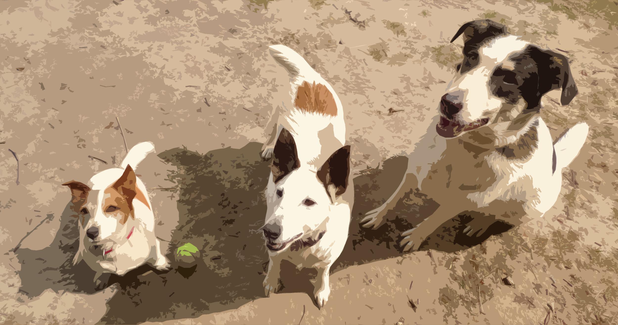 cutout 3 dogs.jpg