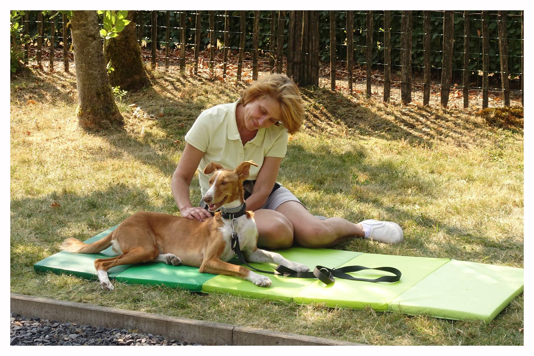 massage voor honden