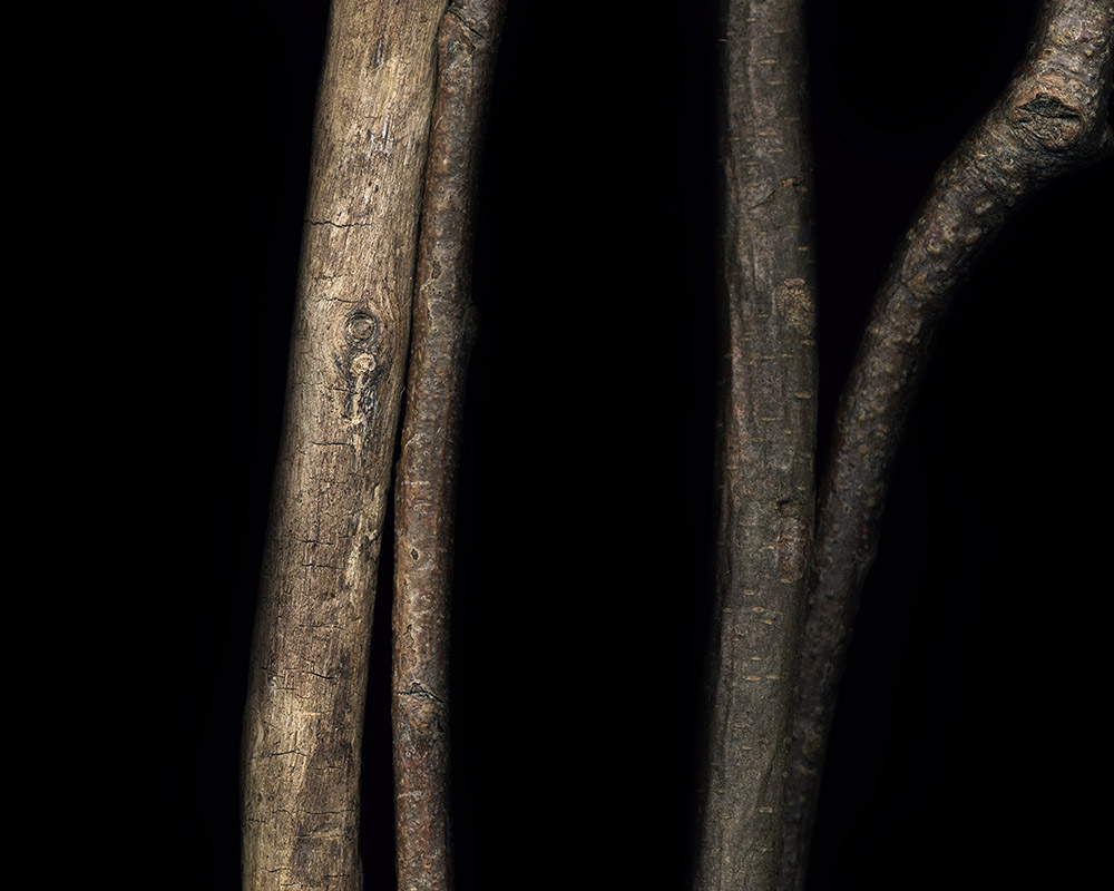 Extraction, Branches