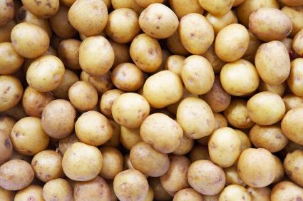 Small Potato Program