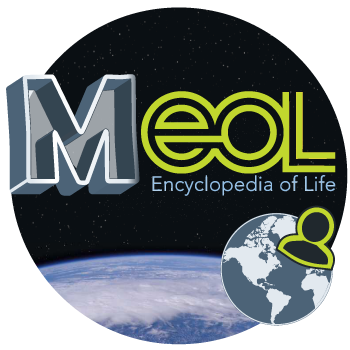 MEOL-image-siteNS-2.png