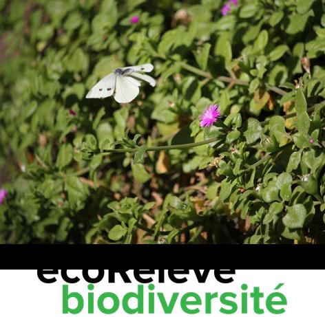 EcoRelevé biodiversité.png