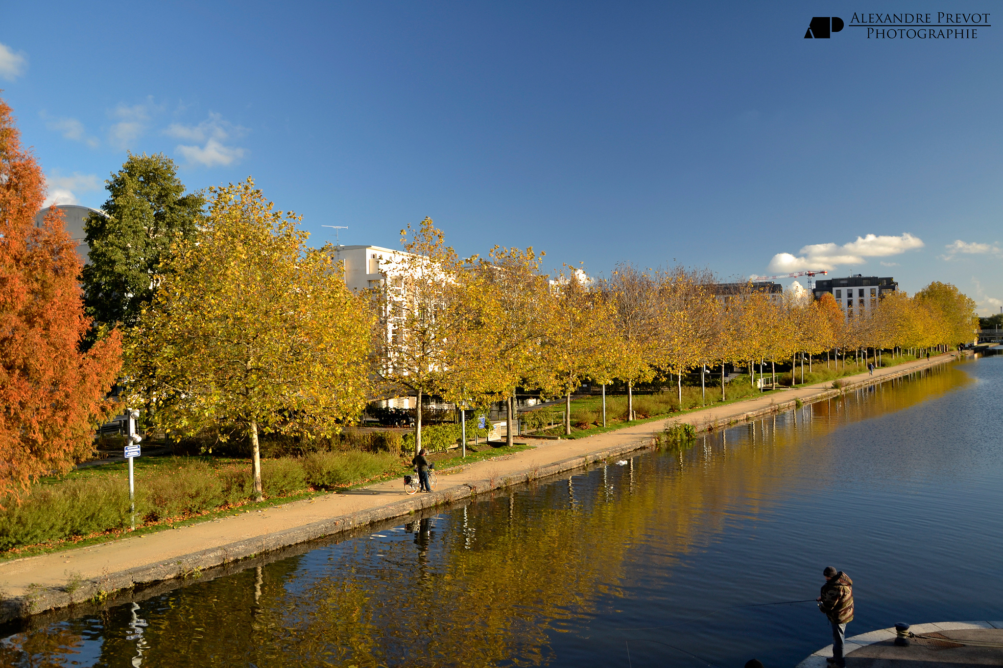 Logiciel de gestion des arbres en ville - crédit Alexandre Prévot