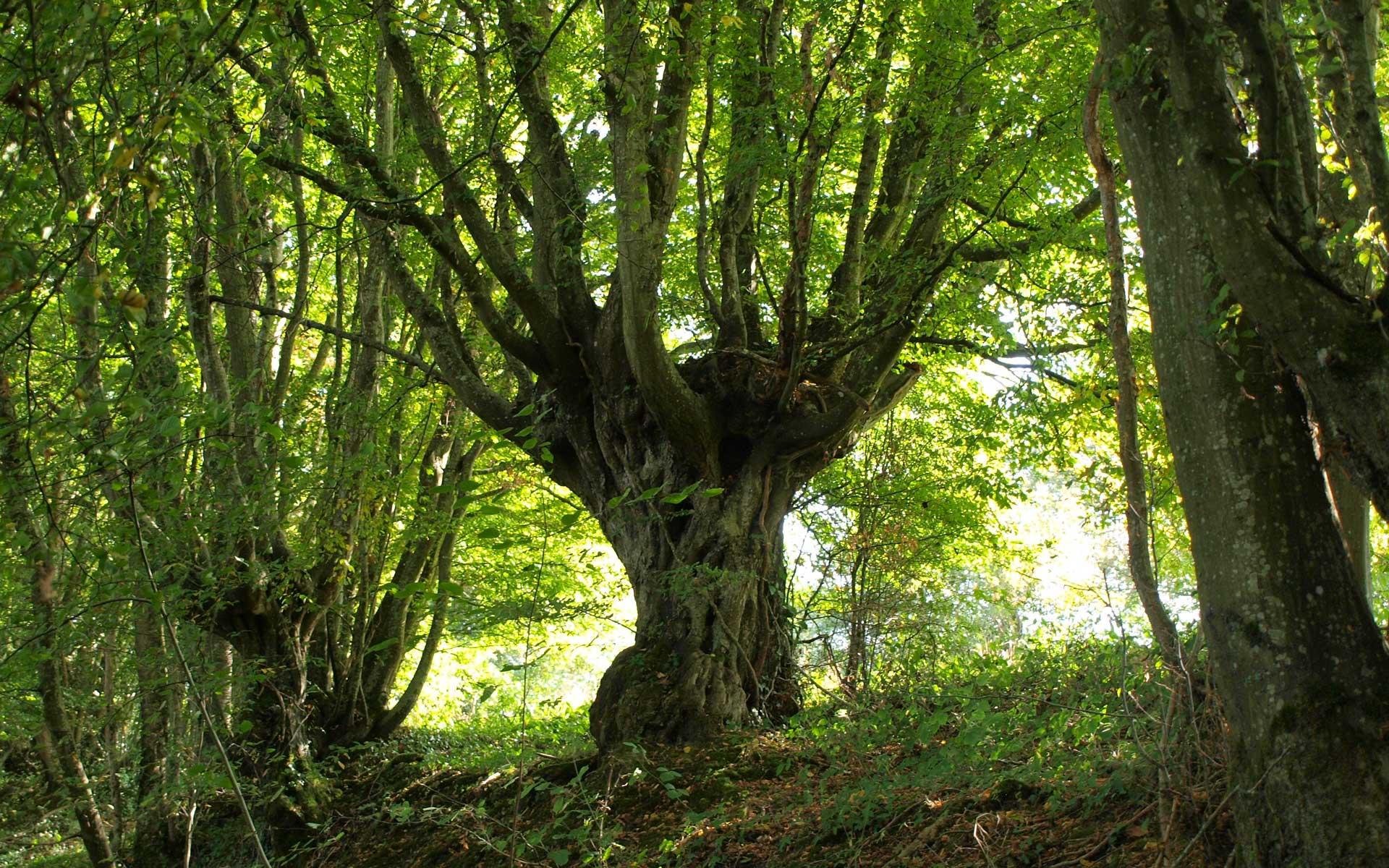 Balade biodiversité - Ecobalade - Crédit Ot Vendome