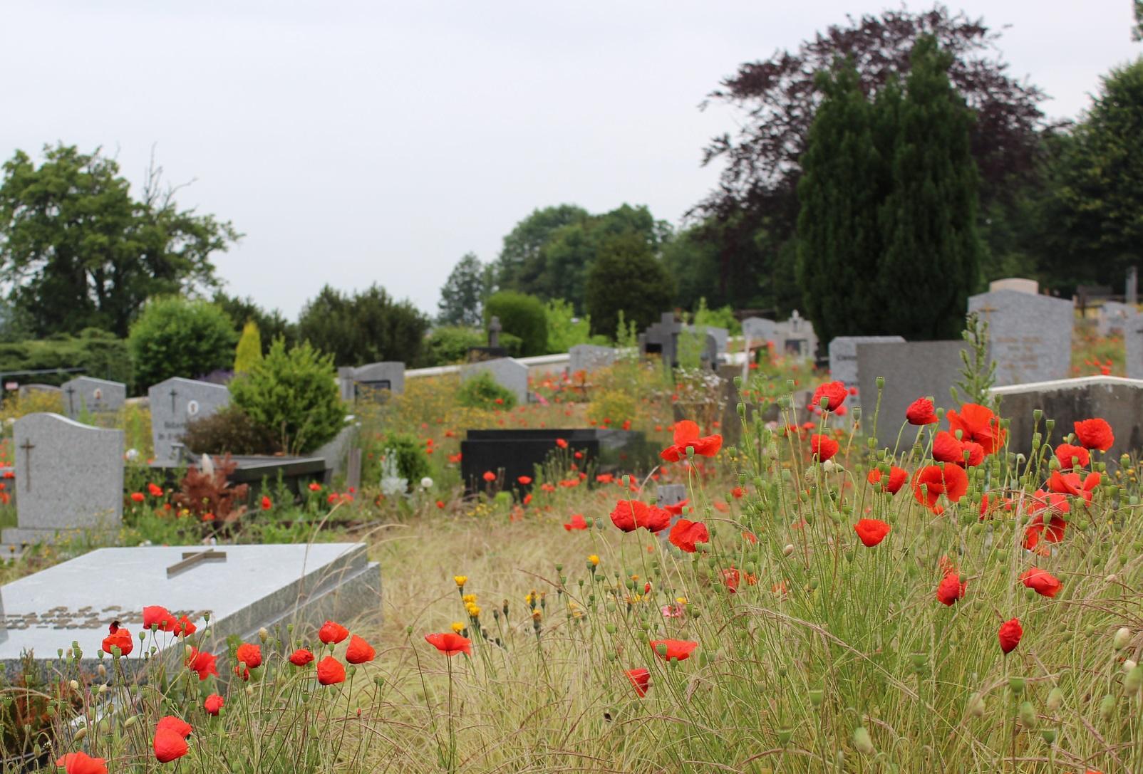 Gestion différenciée des cimetières