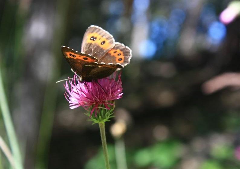 comment verser ses données brutes de biodiversité