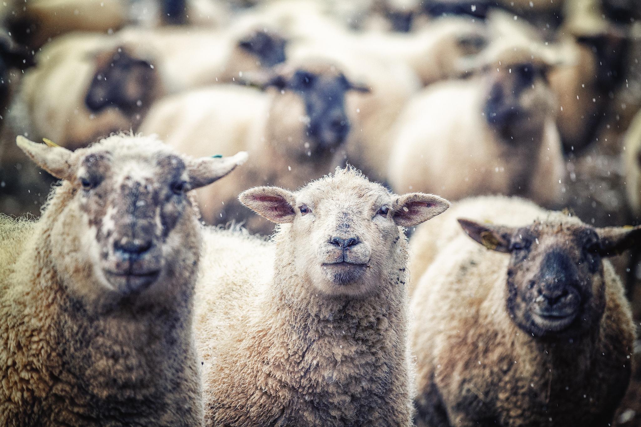 Outils de protection des troupeaux