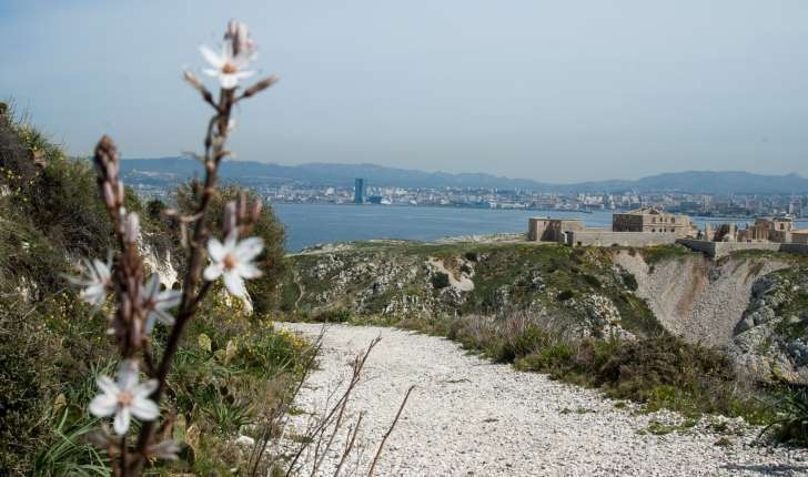 Sentier botanique n°1 : l'archipel de Frioul