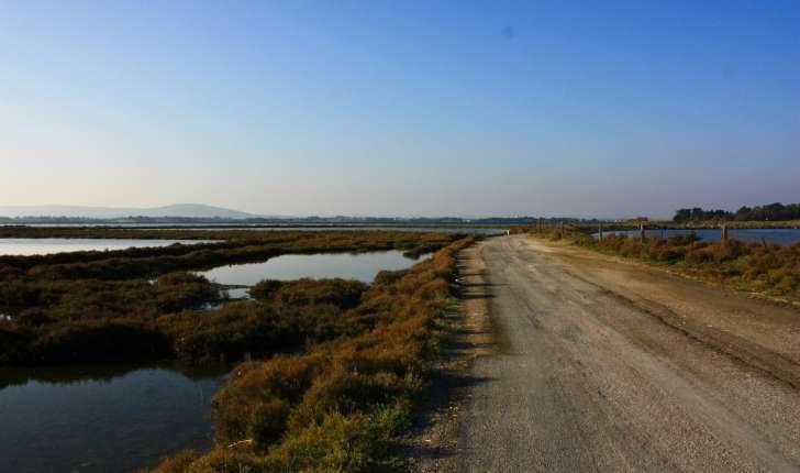 Sentier botanique n°3 : les étangs et la plage du Pilou