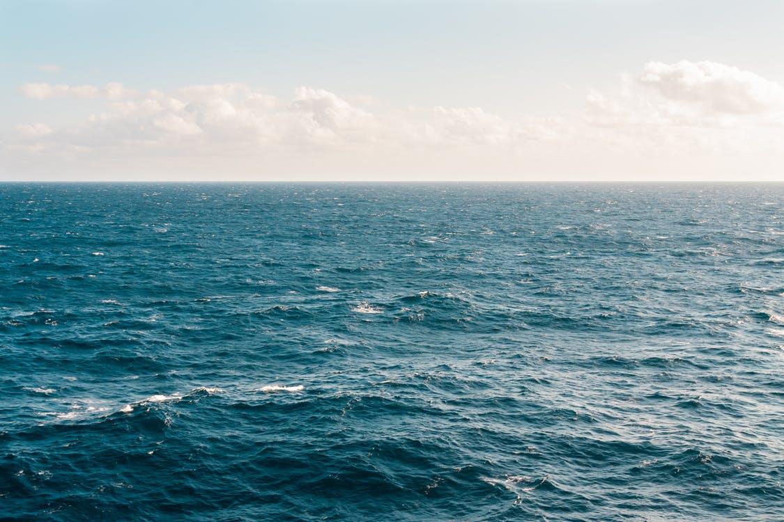 Étude de l'océan et de ses requins - Grâce à l'ADN environnemental