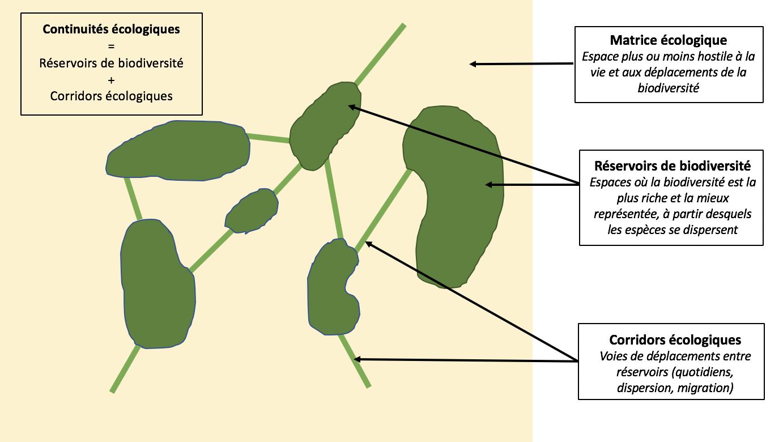 Schéma des continuités écologiques : réservoirs de biodiversité et corridors écologiques (selon le schéma d'INPN, Inventaire National du Patrimoine Naturel)