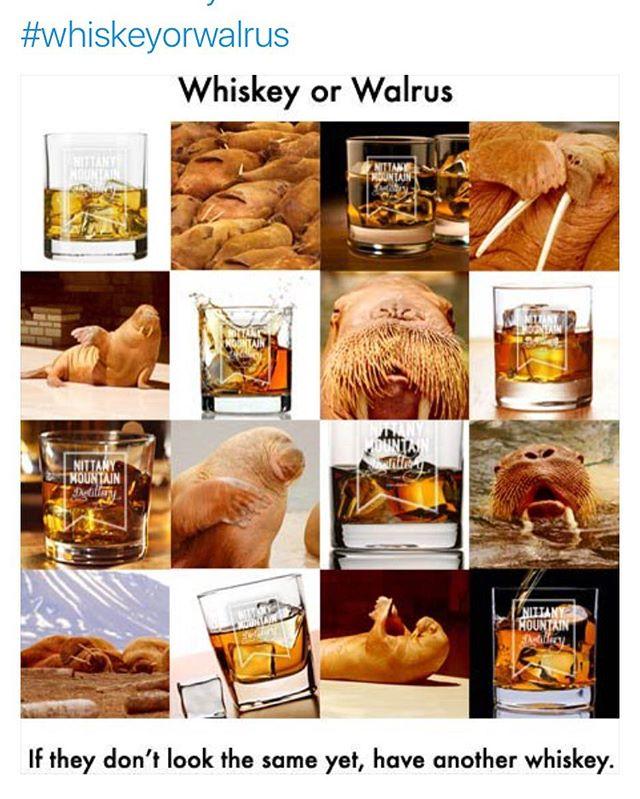 Whiskey or walrus! #memes #nittanymountaindistillery #wednesdaywisdom #whiskeyorwalrous #statecollege #pennstate #spirits