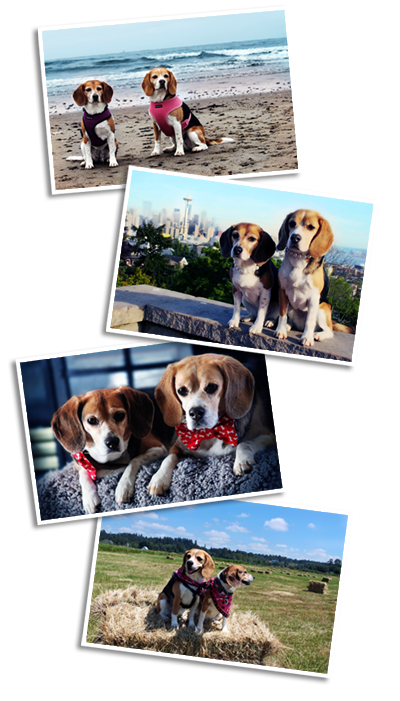 My Beagles, Tracksie and Tig