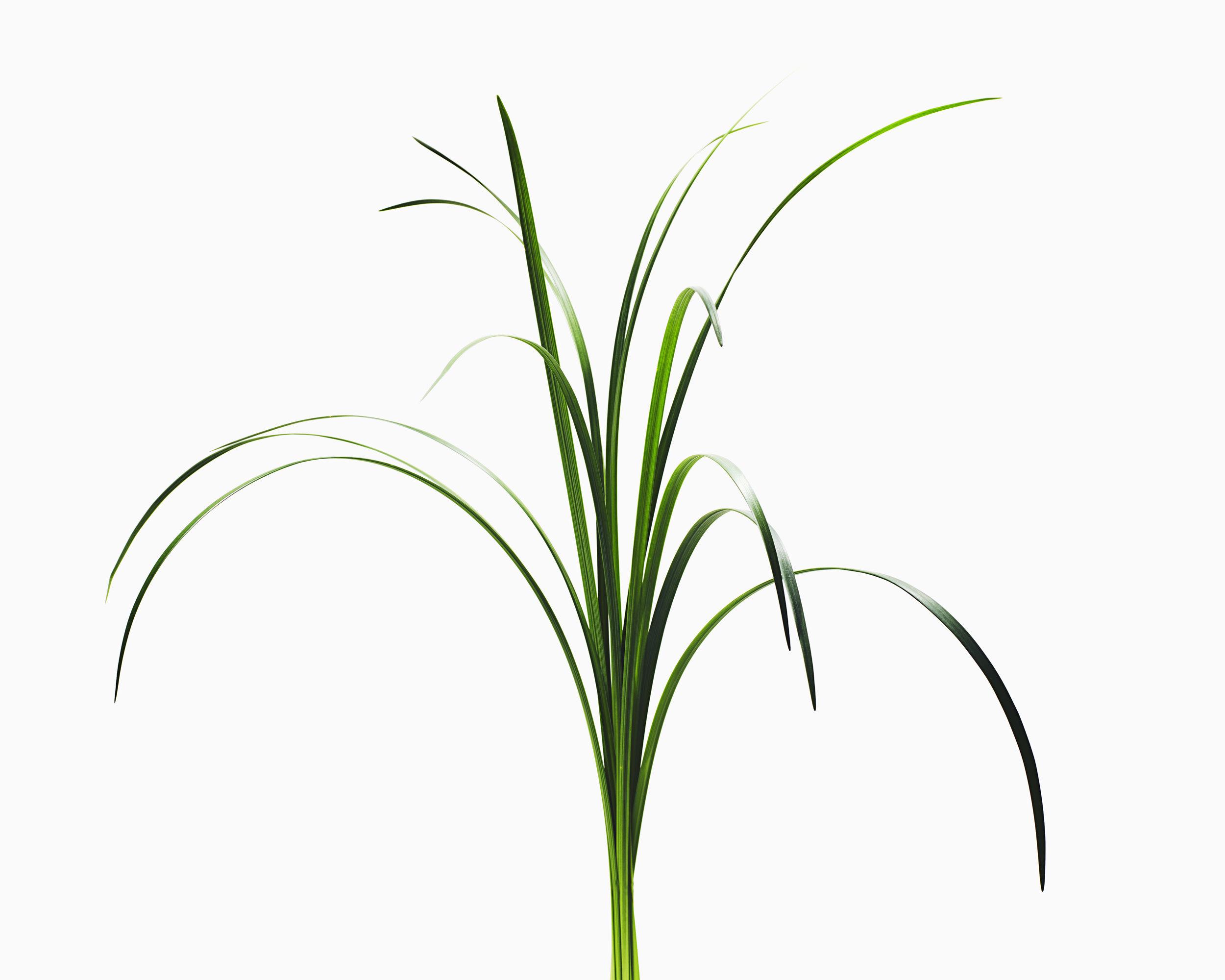 061918_Plants_1854.jpg