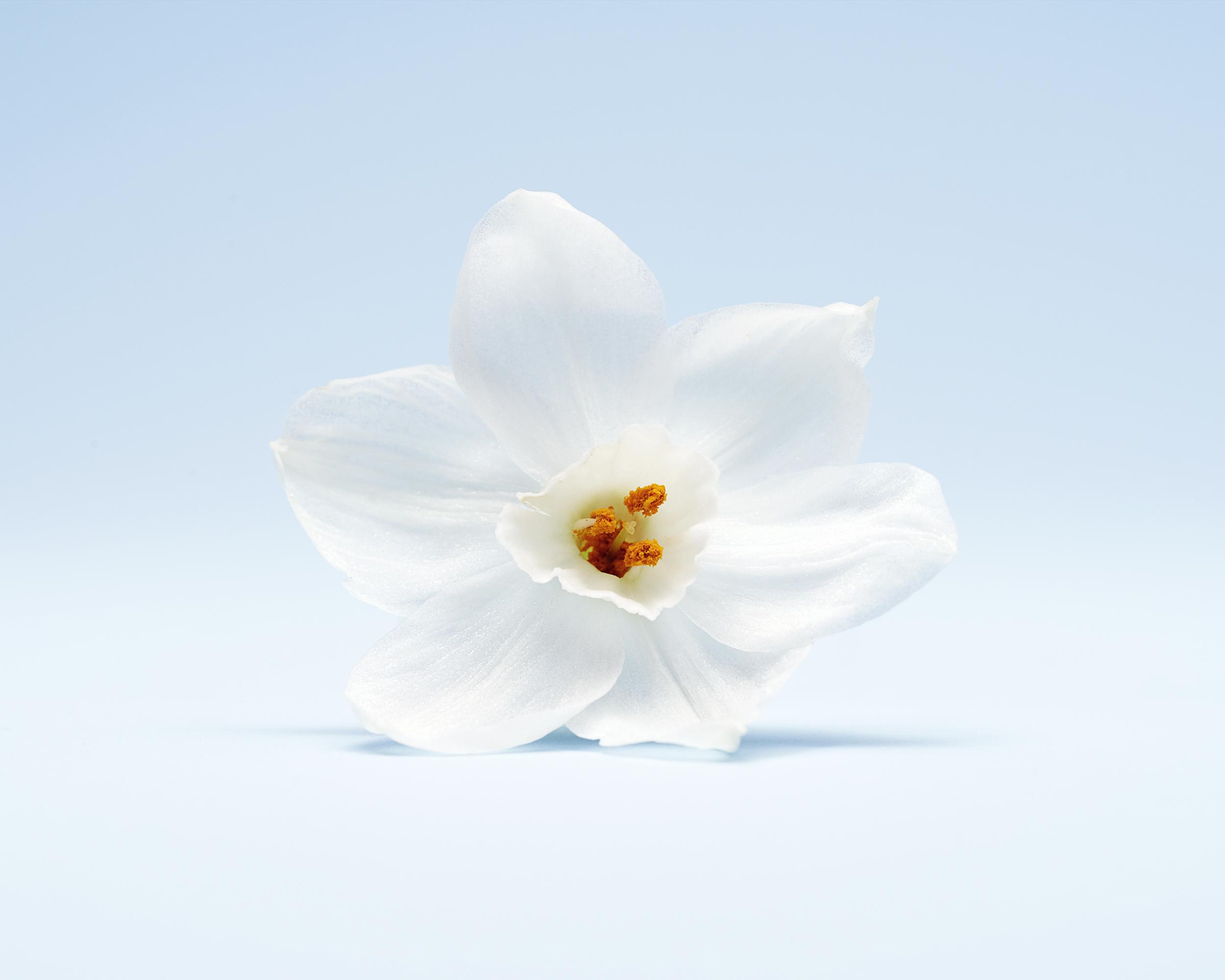 011219_Flowers_3423.jpg