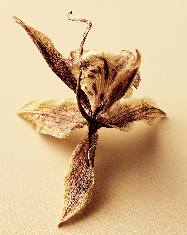040419_Dead_Flowers_6664.jpg