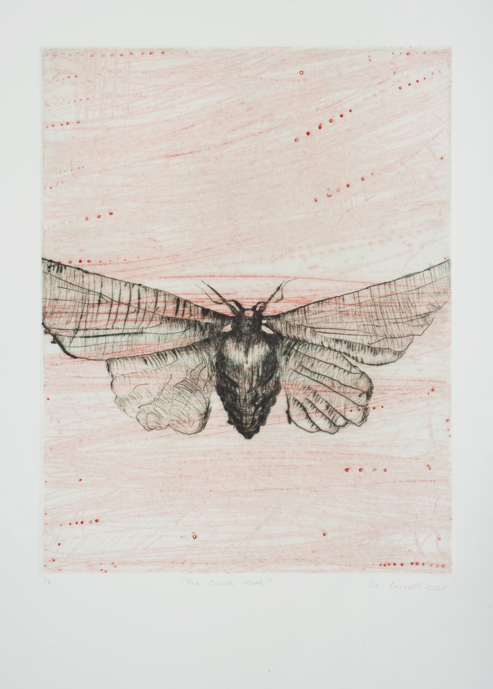 Black Moth 2002