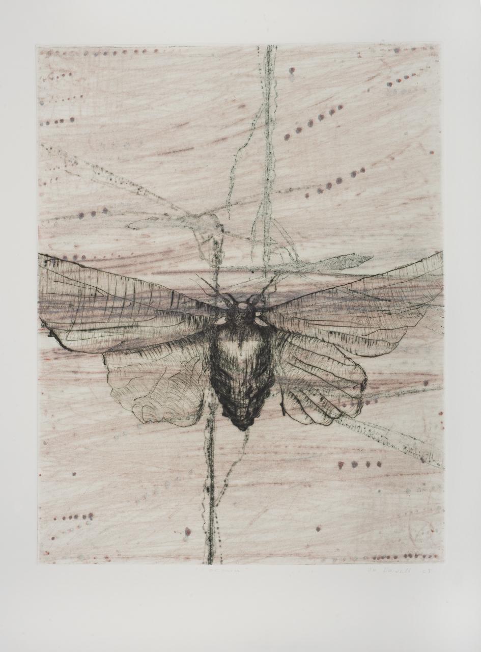 Black Moth brown 2009