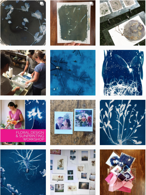 jocelyn matthewes cosmic botanical cyanotypes