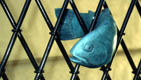 """Catherine Truman's """"fish gates"""" behind the Art Gallery of SA."""
