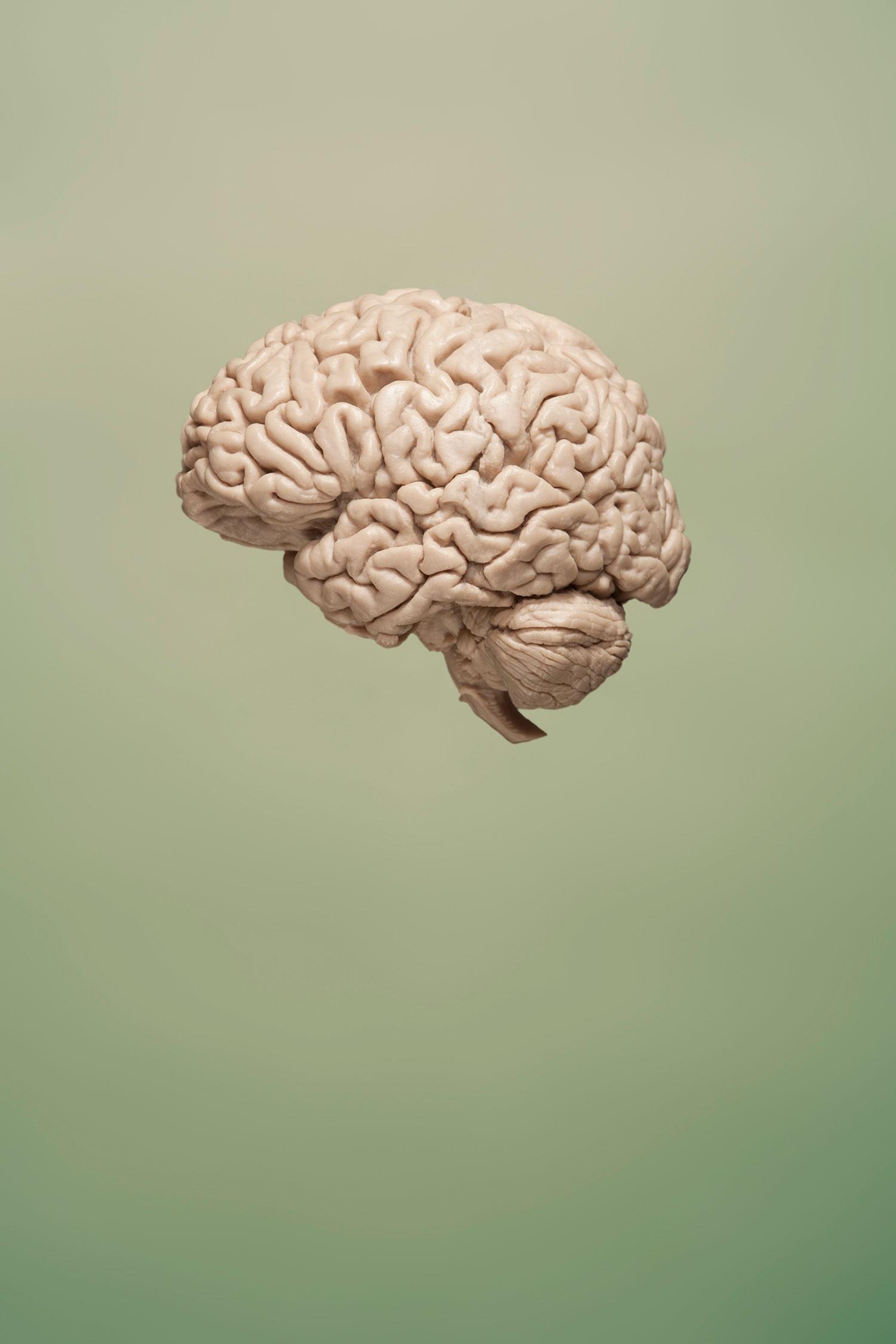 brain_forweb.jpg