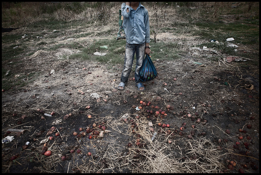 A Child gathering fallen fruits from the ground near the fruit market, in order to sell them outside the market to support himself.