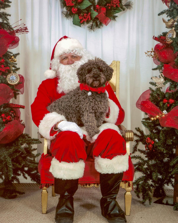 Spencer dog with Santa