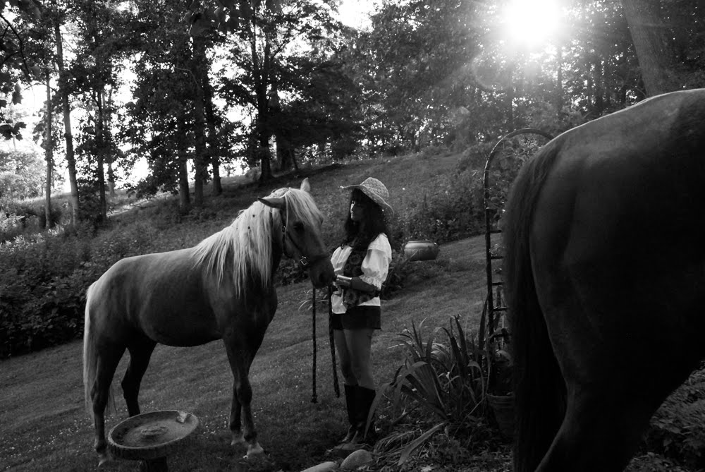 serena and her horses by whitney s williams