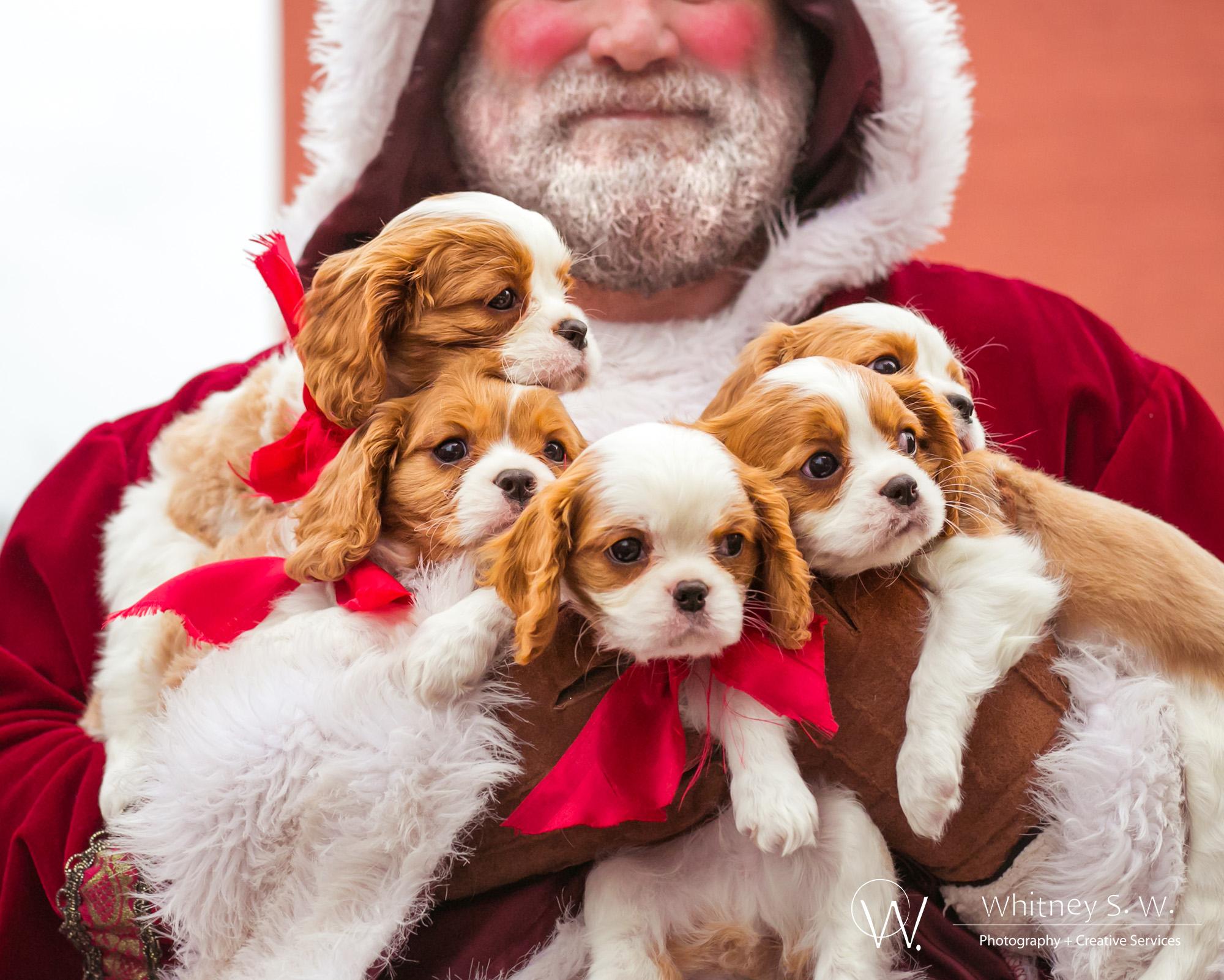 Santa with Dogs - Photo by Whitney S Williams - whitneysw.jpg