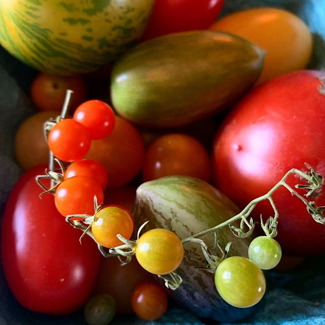 We love this rainbow of local Num Nums. 🌈🌱 🍅#veggies #tomatoes #farm #upstate #upstateny #local #tasty #rhinebeck #libertypublichouse #libertyrhinebeck #hudsonvalley