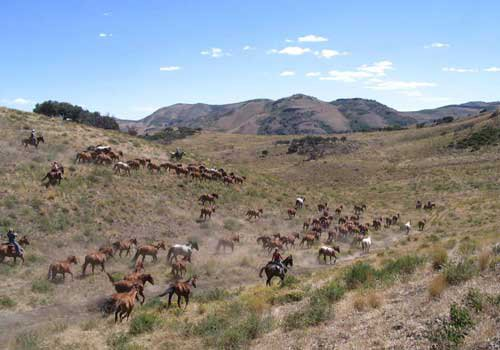 Cottonwood Guest Ranch Horse Drive