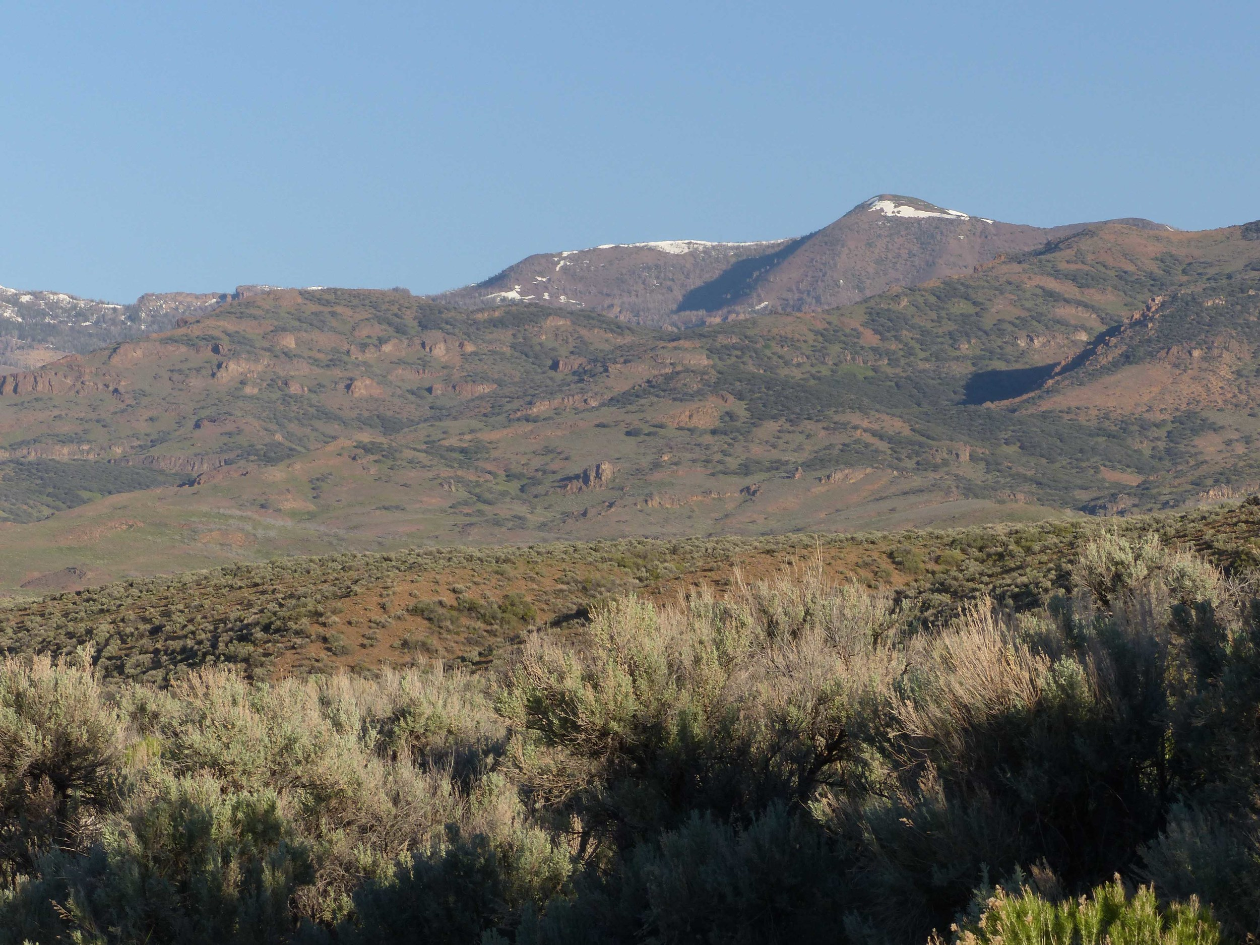 1cs P1150788 Western hills am.jpg