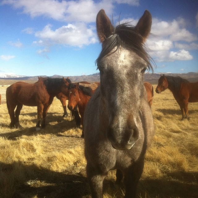 #TBT to this time last year. Look at the winter coats on these beauties. #ilovemyhorse #gowest