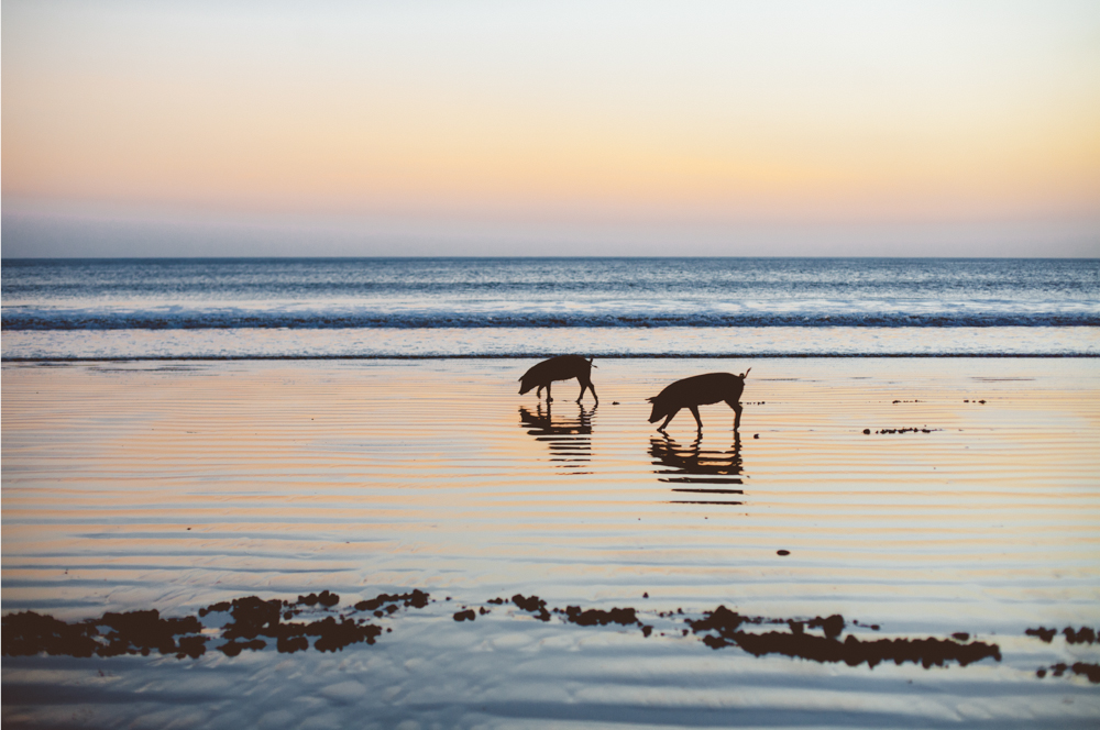 Love is real. Astillero beach