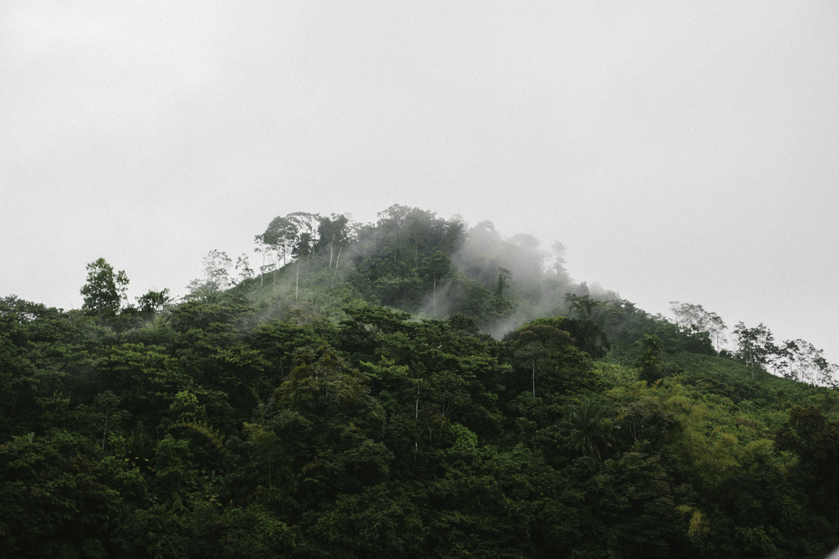 Through the Joungle