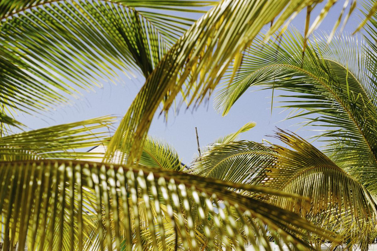 palm trees corn island