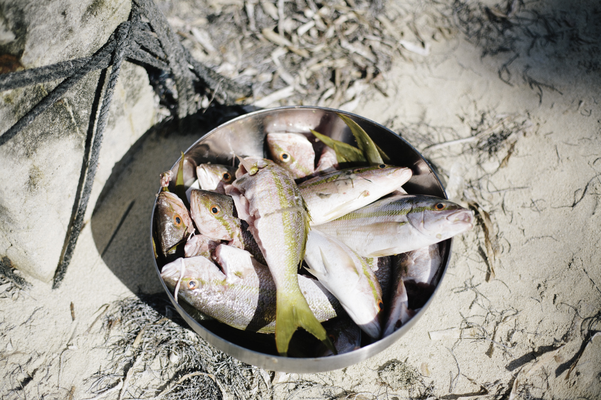 fishes corn island